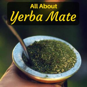 yerba mate tea