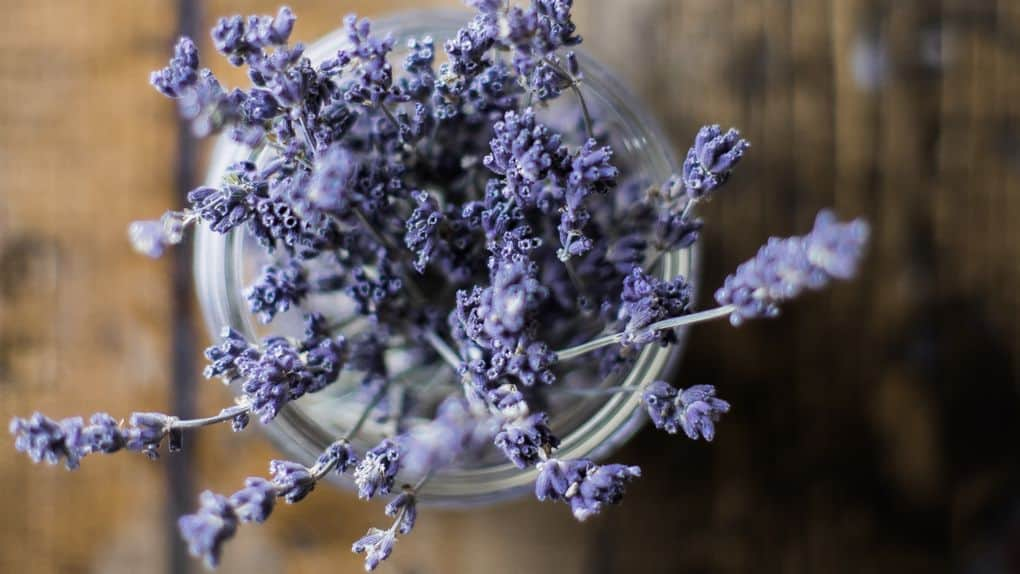 Dried lavender in cup