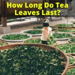 How Long Do Tea Leaves Last