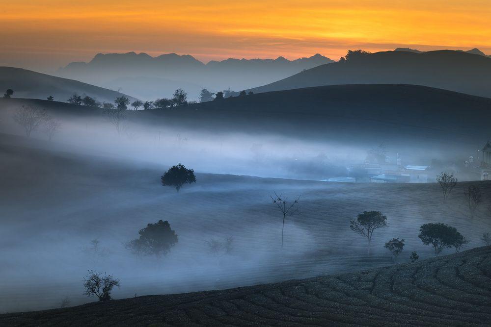 Tea plantation in high humidity
