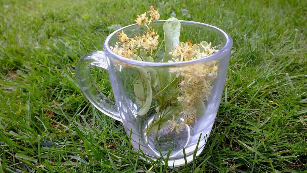 Linden Tree Tea