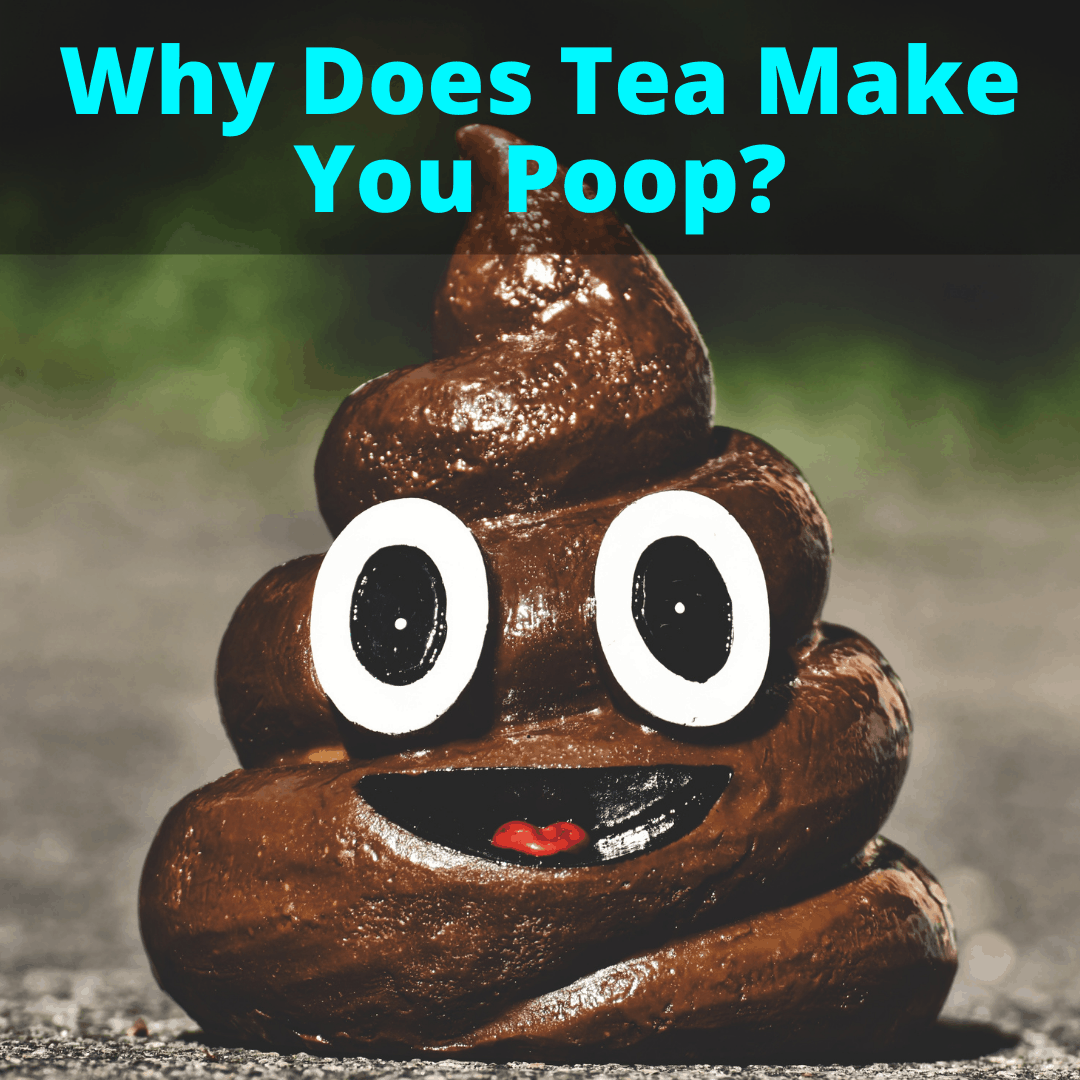 Why Does Tea Make You Poop