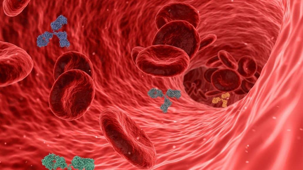 inside blood vessel