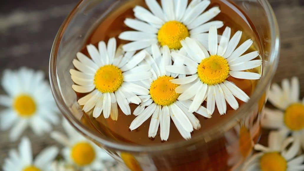 chamomile flowers in tea