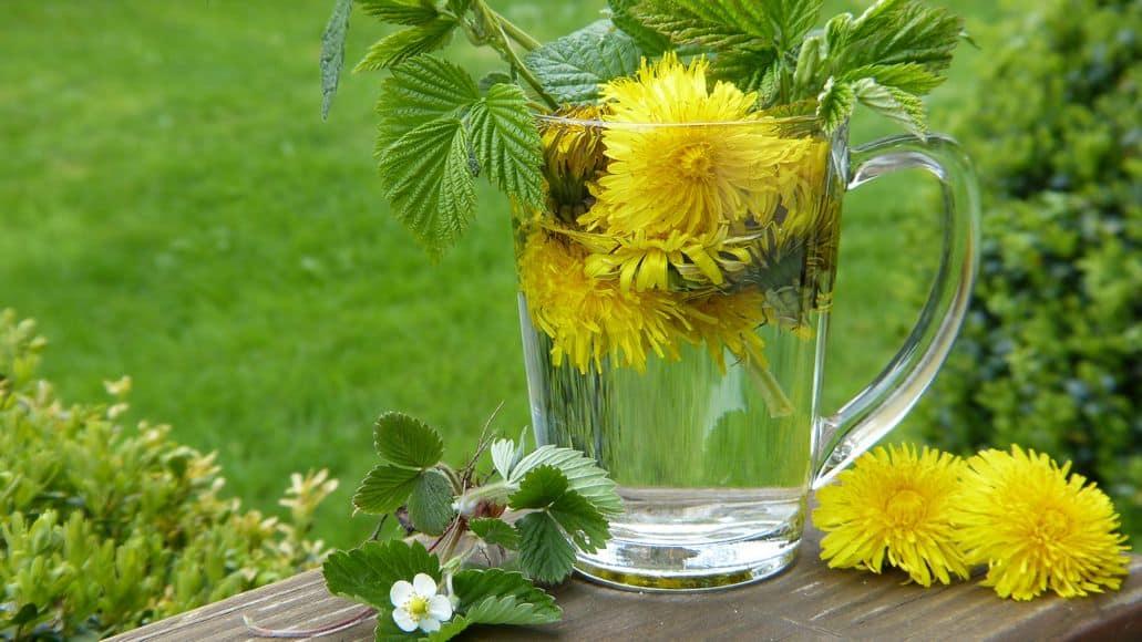 dandelion flowers in tea glass